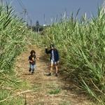 Caminhadas com netos