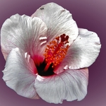 Uma Formiga na Flor_