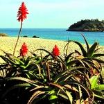 Praia do Creiro.