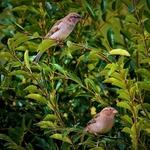 Pássaros nos ramos.