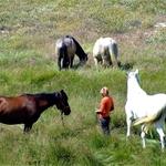 A Manina e os Cavalos.