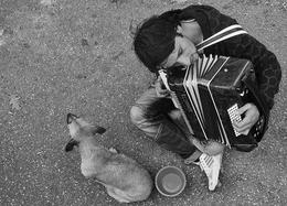 O cão e o acordeonista