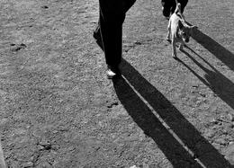 O cão e as sombras