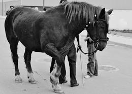 Cavalo desconfiado