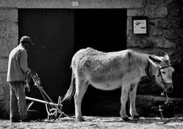 O burro e o arado