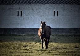 Cavalo no lameiro