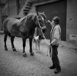 O homem, o cavalo e o cão