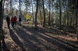 Sombras na floresta