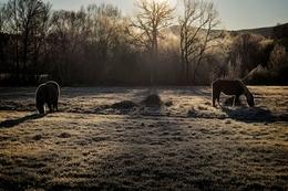 Cavalos no Barrroso