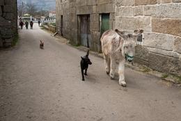 O cão e o burro