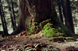 A luz beijando a floresta