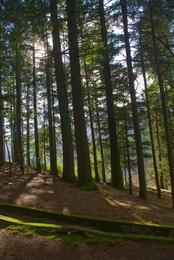 Passeio pela floresta