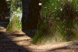 Árvores e suas sombras