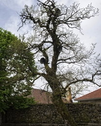 A árvore dos altifalantes